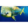 GoFish Cam, la pêche comme vous ne l'avez jamais vu auparavant.