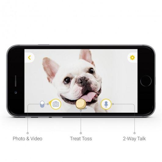 Furbo, the best friend pets camera