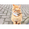 Weenect Cats, GPS device for cats