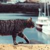 Invoxia Pet Tracker, ne soyez plus jamais loin de votre animal de compagnie
