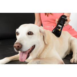 B-Cure Laser Vet, a home laser therapy